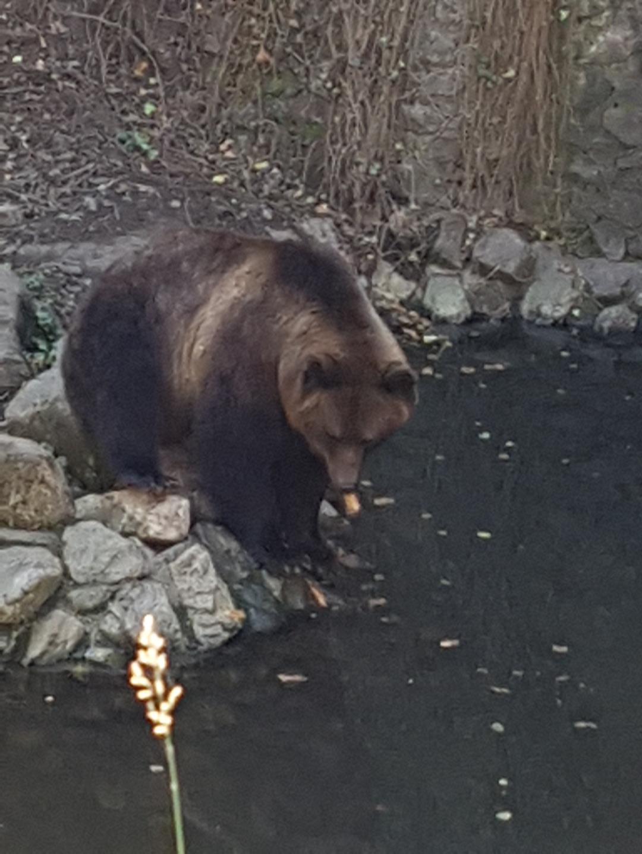 Björn i vallgraven
